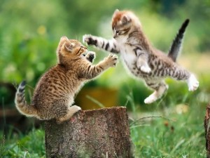 ppc keyword research fight